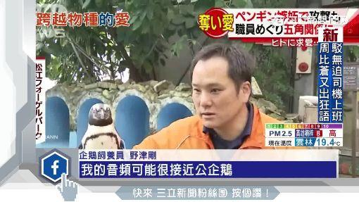 """後宮企鵝爭寵 """"人鵝戀""""放閃日動物園"""