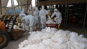 台南蛋雞場傳禽流感 撲殺逾7千隻 台南市下營區1處蛋雞場19日確診為H5N2高病原性禽流 感,成為台南市第3處確診的案場,動保處再次啟動防 疫處置作業,完成撲殺7782隻蛋雞。 (台台南市動保處提供) 中央社記者楊思瑞台南傳真  106年2月19日