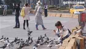 禽流感,鴿子,H5N6,防疫,疾管署,農委會 圖/記者林敬旻攝