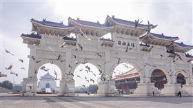 自由廣場,中正紀念堂,禽流感,鴿子,H5N6,防疫,疾管署,農委會 圖/記者林敬旻攝