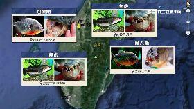 兇猛魚地圖1800