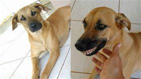 愛犬躲後院挖土 回來詭異笑容嚇壞主人。資料來源:Mornington Peninsula Dog Lovers臉書