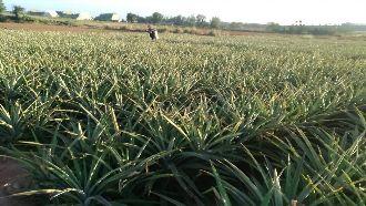 行政院今日通過「農田水利法草案」