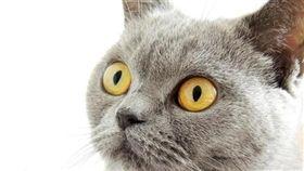 寵物滔客(圖片版權屬於滔客線上雜誌)