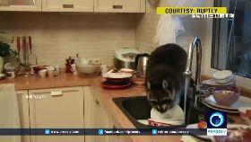 浣熊幫洗碗1600