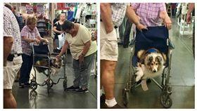 ▲老奶奶跟老狗狗輪流坐輪椅。(圖/翻攝自《The Dodo》) https://www.thedodo.com/woman-and-dog-share-wheelchair-2303322056.html