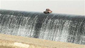 河馬,嚕嚕米,攔沙壩,攔砂壩,趴,悠哉,悠閒,放鬆,享受,南非,動物,可愛-翻攝自Ngwenya Marketing臉書