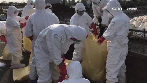 禽流感,疫苗,農委會,過期,銷毀,防檢局