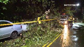 a樹倒毀兩車0600