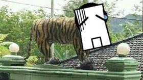 老虎,營區,吉祥物