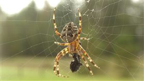 蜘蛛  https://www.flickr.com/photos/tweek/877879/in/photolist-5uXR-gUEpBf-pe4KwE-cxcifb-8BbzH4-5pgYFH-fJqTGY-7cYAxN-3CWhk-tWSrT-5qn6Rb-fk2ppv-8e6qW-ivXXB-fQnV44-rTkVv-2gmxVj-7cYA6G-otMUzA-5HjDTB-fRXJpi-