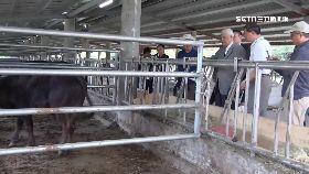 擎天岡和牛1800