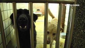 -流浪狗-動物收容所-動物之家-