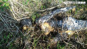 民眾報案有焦屍,警到場:X!塑膠ㄟ 。