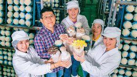 圖說:方世文( 左2) 開發獨家菌種,商業化品種逾10 種,包含少見的粉紅玫瑰菇、杏香菇等獨家產品,還與亞洲大學合作量產香水銀耳。(攝影者.賴建宏)
