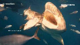 近觀鯊吞食1200