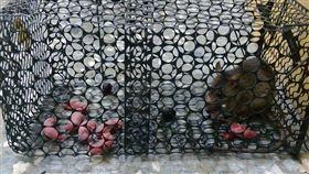 老鼠,寶寶,嬰兒,親情,母老鼠,鼠媽媽,爆廢公社,放生,坐月子,捕鼠籠,餓死 圖/翻攝自爆廢公社臉書 https://goo.gl/1Zxq6m