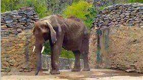 委內瑞拉,大象,營養不良/每日郵報