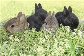 狗,兔子,動物,寵物,毛小孩(圖/Pixabay)