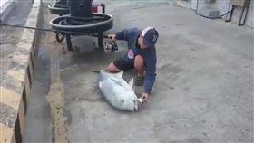 ▲墾丁牛港鰺「阿牛」被違法釣客釣起。(圖/翻攝自YouTube-Jason Liu頻道)