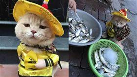 朕想嘗嘗!貓皇穿龍袍出巡 見魚販表情超萌。資料來源:大陸今日頭條