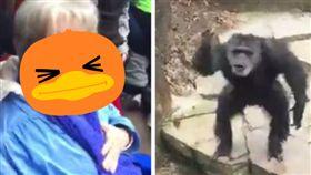 黑猩猩,挑釁,內急,廁所,黃金,屎,婦人,臉,猩猩 圖/翻攝自eBaumsWorld影片 https://goo.gl/oC1FSr