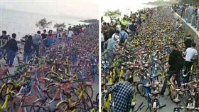 連假,清明,深圳灣,共享單車,腳踏車,自行車 (圖/翻攝自微博)