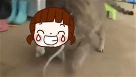 小貓,貓,喵,偷吃,章魚,水盆,韓國,SBS,Culeureup,臉 圖/翻攝自Youtube影片https://goo.gl/Odgtui