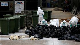 H7N9,中國大陸,西藏 圖/路透社/達志影像
