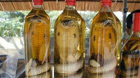 眼鏡蛇,蛇,藥酒(圖/翻攝自infotainmentpk.net)