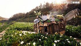 竹子湖海芋持續綻放 台北吹遊就這樣玩、飯店推2.7折優惠