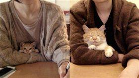 就愛黏踢踢!橘貓塞主人臂彎撒嬌 半年對比照超驚人。資料來源:Zzzzzbo推特