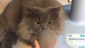 ▲貓毛做的特製毛球。(圖/翻攝自《貓咪也瘋狂俱樂部 CrazyCat club》臉書社團)