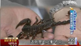 蛇蠍龜另類寵物 細紋藍舌蜥罕見