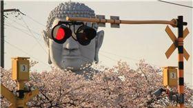 愛知,日本,推特,佛像,大佛,布袋大佛,櫻花 圖/翻攝自@Kiha85Nanki推特