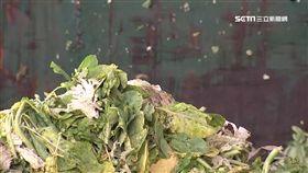 廢棄蔬菜,北農