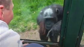黑猩猩,比手畫腳,出去,自由,小編,玻璃窗,心疼,心碎,難過 圖/ 翻攝自Dodo Impact https://goo.gl/5n5J6U