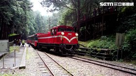 阿里山森林鐵路-神木線(圖/林務局提供)