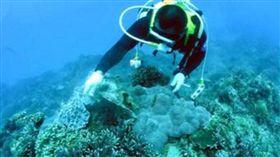 珊瑚(圖/翻攝自營建署網站)
