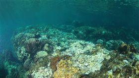 墾丁水溫破30度 珊瑚白化17年來最嚴重(中央社)