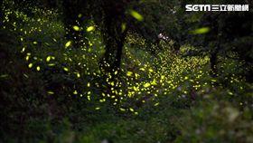 台南楠西梅嶺螢火蟲爆發 賴清德大談四層幸福