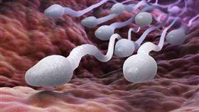 精子,精液,精蟲,男性,細胞,生殖,生育,受孕,不孕,受精,生命的奧秘(圖/美聯社、達志影像)