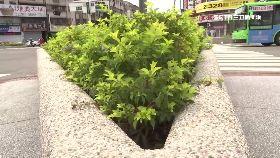 超離譜種樹1200