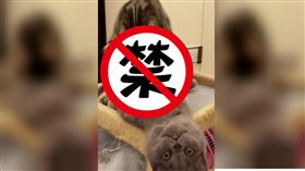 貓,愛愛,貓皇,鏟屎官,喵,家,瞪,偷拍,有樣學樣,學習能力,眼神 圖/翻攝自貓咪也瘋狂俱樂部 https://goo.gl/FtwtLj