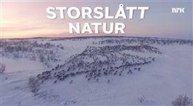馴鹿遷徙 圖/翻攝自NRK臉書