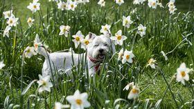 狗,散步,戶外,奔跑,寵物,毛小孩,汪星人,愛犬(圖/達志影像)