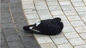 nike,鴿子,球鞋,鞋子,運動鞋 圖/翻攝自推特