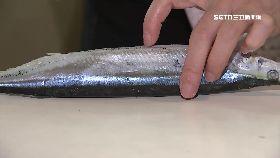 秋刀魚洞蟲1200