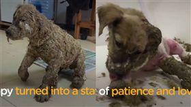 狗狗,膠水,虐待 圖/翻攝自Dodo Impact臉書