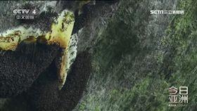 勇攀喜馬拉雅山 採蜜人懸崖邊展絕活